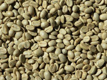 コーヒー豆にはどんな品種があるのか?